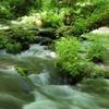 6月 奥入瀬渓流 2