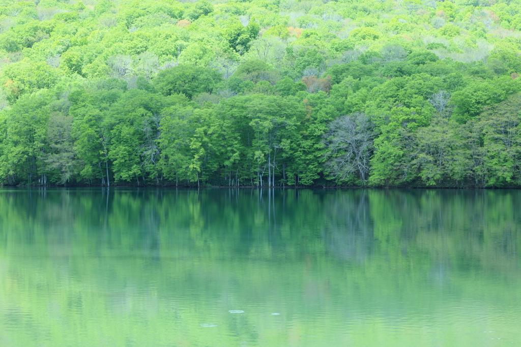 蔦沼 4日目の新緑