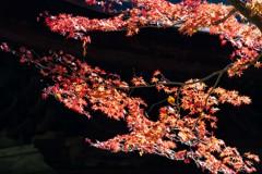 定光寺の秋色
