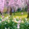 夢の花園・・・