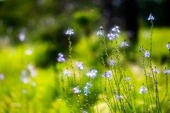 陽光うららかな日に咲く・・・