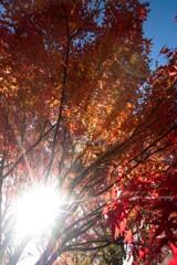 寂光院の秋色・・・
