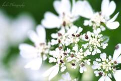 路傍の花・・・・