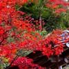 長谷寺の秋色