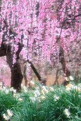 今はもう春・・・