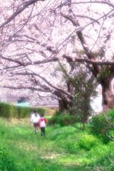 桜の樹の下で・・・