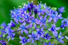 路傍の花・・・