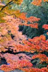 秋葉山平針御嶽講社 紅葉