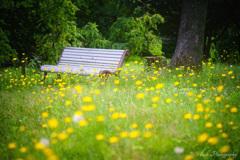 お花畑のベンチ・・・