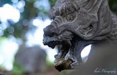 島田神社の龍