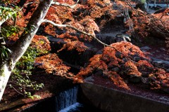 岩屋堂公園の秋色