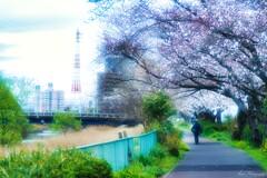 さくら咲く小道・・・