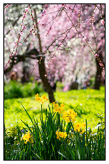 春への誘い