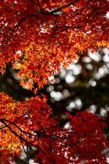 秋葉山慈眼寺の秋色