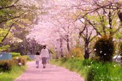 桜咲く小道・・・