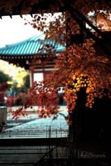 大森寺の紅葉