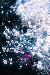 野に咲く梅の花・・・