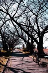 立春の散歩道・・・