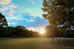 庄内川緑地公園の落日・・・