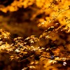 キラキラ・黄金色の秋模様