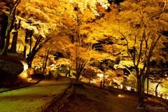 黄金色の秋・・・