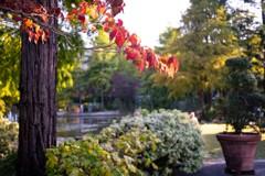 秋色の到来