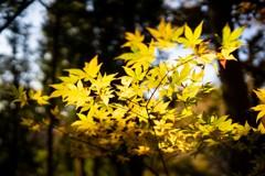 天竜峡の秋色