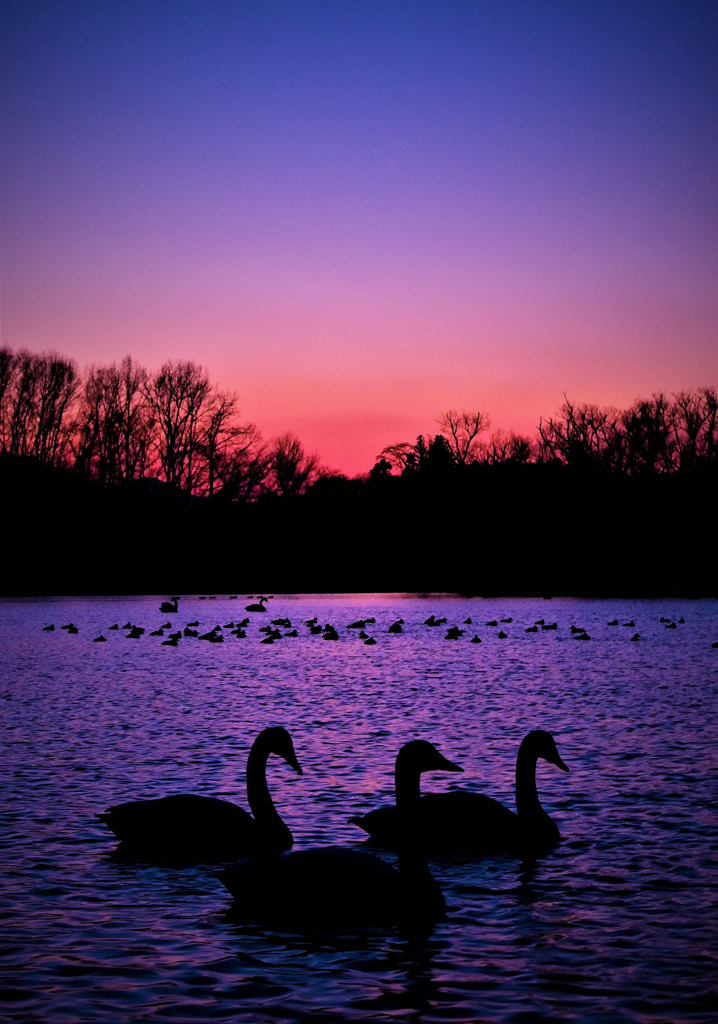 静寂の高野池