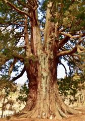 福島県1位の巨木①