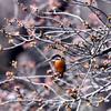 桜カワセミ序章 プロローグ