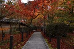 禅林寺紅葉