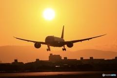 Itami-Airport 初撮り