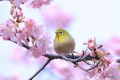 春、ほのぼの
