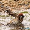 雀の川登り