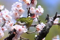 梅・緑・春