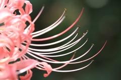 ピンクの色気 ♡
