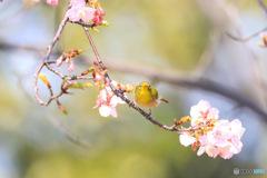風光る 花揺れる 春