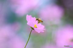 働き蜂の秋