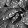 雨に濡れるー3