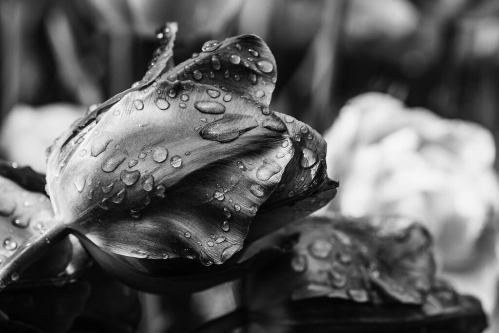 雨後の花(4)