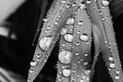 雨に濡れるー2