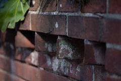 赤煉瓦塀ー2