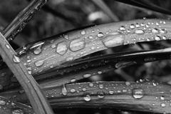 雨に濡れるー1