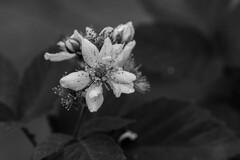 花と蟻-2