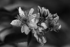 花と蟻-1