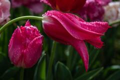雨後の花(3)