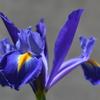バンザイして喜ぶ紫