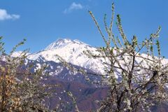 春の巻機山