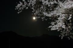 お月さんと桜