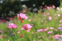 優美な花姿